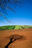 Cultivating Land. Tree shadow on cultivated land Stock Image