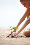 Cultivating plant Stock Images