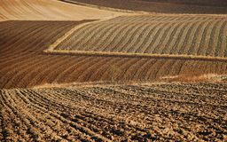 Cultivation fields in fall Royalty Free Stock Images