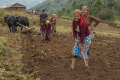 cultivation fields in Nepal Royalty Free Stock Photos