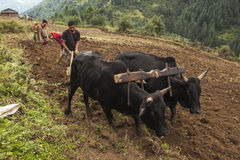 cultivation fields in Nepal Royalty Free Stock Photo