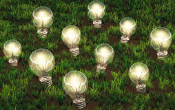 Cultivation of lit light bulbs Stock Photos