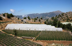 Cultivation in the mountains. Agricultural cultivation in the mountains protected under tents which act as greenhouses Stock Photos