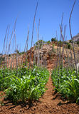 Cultivation in the mountains. Agricultural cultivation in the mountains Royalty Free Stock Photos