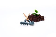 Cultivation of a new life or idea royalty free stock photos