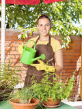 The cultivation of plants in pots Royalty Free Stock Photo