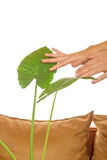 Cultivation of potted plants Stock Photos