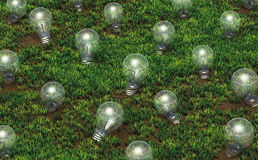 Cultivation of unlit light bulbs Stock Image