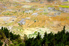 Cultivation in volcano crater Royalty Free Stock Photos