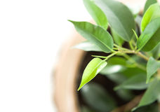 Cultivation of a young plant. Young plant on white background Royalty Free Stock Photos