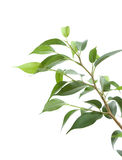 Cultivation of a young plant. Young plant on white background Stock Image