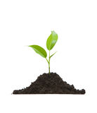 Cultivation of a young plant. Young plant on light background Royalty Free Stock Photos