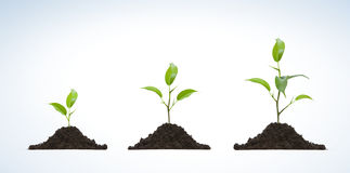 Cultivation of a young plant. Young plant on light background Royalty Free Stock Images