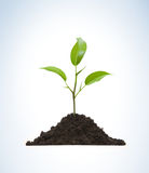 Cultivation of a young plant. Young plant on light background Stock Image