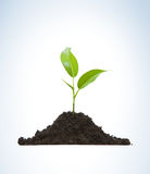 Cultivation of a young plant. Young plant on light background Stock Photo