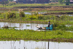 Cultivations on Inle Lake Royalty Free Stock Photo