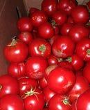 Cultive a caixa fresca de tomates maduros para o molho Fotos de Stock Royalty Free