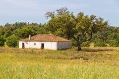 Cultive a casa com plantação do trigo e as árvores no vale Seco, Santia Fotos de Stock Royalty Free