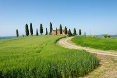 Cultive a casa de campo com árvores de cipreste e campo de trigo da cevada Fotografia de Stock