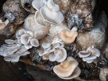 Cultive cogumelos fotografia de stock royalty free