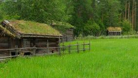 cultive con el tejado norwagian hermoso de la hierba verde de pueblo, Noruega, 4k almacen de video