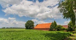 Exploração agrícola da batata Fotografia de Stock
