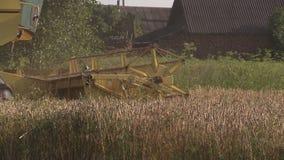 Cultive el campo de grano del trigo de la cosecha de la maquinaria agrícola en verano metrajes
