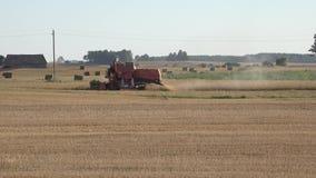Cultive el campo de grano de trilla del trigo de la cosecha mecanizada en verano Panorama 4K metrajes