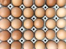 Cultive el huevo en el envase de papel, primer de muchos huevos marrones frescos adentro Fotos de archivo libres de regalías