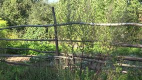 Cultive el jardín incluido con la cerca de madera con el invernadero, las plantas que crecen y las colmenas de la abeja Panorama  almacen de metraje de vídeo