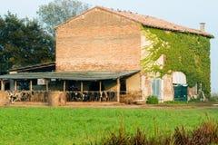 Cultive la casa con las vacas y las balas de heno redondas Fotos de archivo libres de regalías