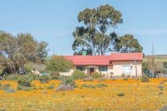 Cultive la casa en un mar de flores salvajes Imagen de archivo libre de regalías