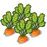 Cultive la zanahoria sabrosa Verdura del vector ilustración del vector