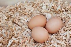 Cultive los huevos frescos Imágenes de archivo libres de regalías