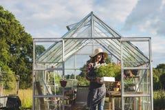 Cultive o conceito sazonal do crescimento da natureza do jardim foto de stock royalty free