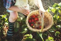 Cultive o conceito sazonal do crescimento da natureza do jardim foto de stock