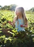 Cultive o conceito sazonal do crescimento da natureza do jardim fotografia de stock