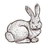 Cultive o esboço animal do coelho, exploração agrícola isolada no fundo branco Estilo do vintage Fotos de Stock Royalty Free