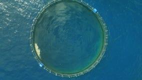 Cultive para los pescados crecientes en el océano abierto almacen de metraje de vídeo