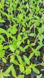 Cultive plantas imagens de stock