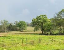 Cultive a terra de pasto na mola com crescimento novo da grama Fotografia de Stock Royalty Free
