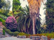 Cultive un huerto con el árbol de palmas, las flores y las escaleras de piedra Foto de archivo libre de regalías