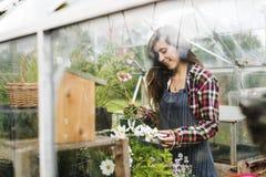 Cultiveer Seizoengebonden de Groeiconcept van de Tuinaard royalty-vrije stock afbeelding