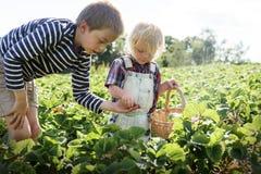 Cultiveer Seizoengebonden de Groeiconcept van de Tuinaard stock foto's