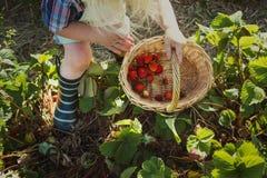 Cultiveer Seizoengebonden de Groeiconcept van de Tuinaard royalty-vrije stock foto's
