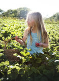 Cultiveer Seizoengebonden de Groeiconcept van de Tuinaard stock fotografie