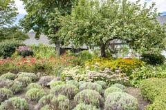 Cultivez avec le jardin et le pommier en automne Image stock