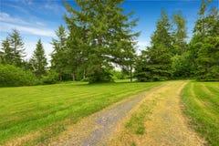 Cultivez l'arrière-cour de maison avec la pelouse verte, sapins, buissons photos stock