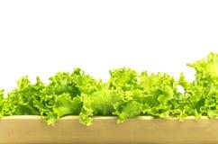 Cultivez la laitue hydroponique, utilisant l'arbre en bambou au lieu du tube en plastique Photo stock