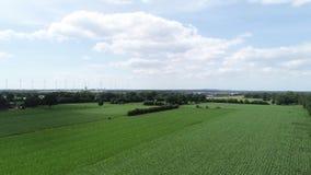 Cultivez la récolte sur un champ de grain au ciel bleu clips vidéos